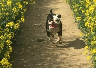 Dog Walking Sevenoaks Kent