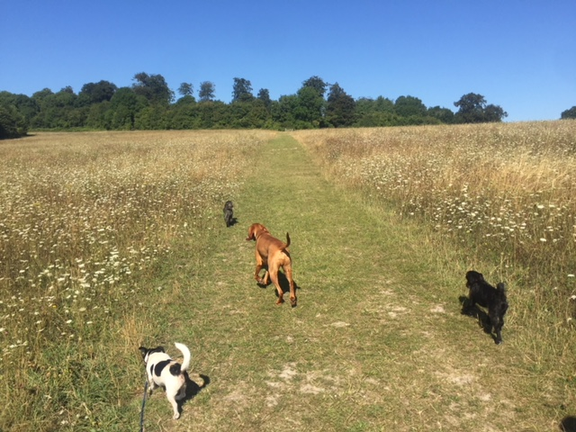 Why are walks important to your dog?